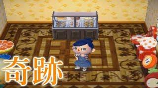 【とび森】厳選して買った6万円分の中古のデータからヤバすぎる奇跡がww【PART54】 thumbnail