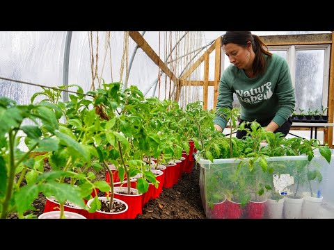 Growing Food for the Year | Gardening in Alaska