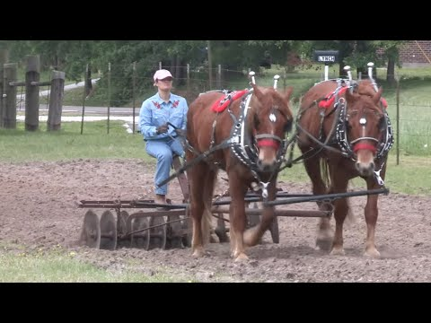 Texas Draft Horse And Mule Association Field Day