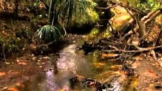 Milton Fries Cerrado brasileiro Nascentes do Rio Araguaia