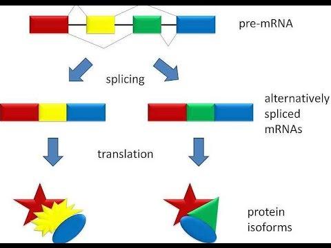 mRNA Splicing: Alternative Splicing...