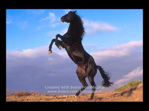 Come Cavalli Selvaggi By Fabry Capodivento Youtube