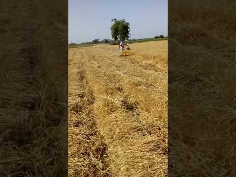 Amazing cutting wheat  with reaper.Most watch all farmer...