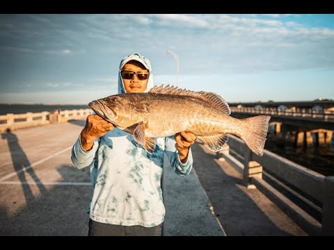 LIVE BAIT For GROUPER Fishing Off PIER - INSTANT GIVEAWAY