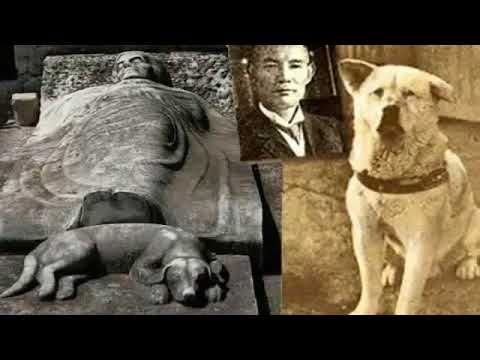 real life the true story of hachiko the faithful dog