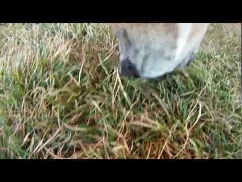 Doggie Dash And Dawdle 11/04/2012 Rylie Cam Part 1