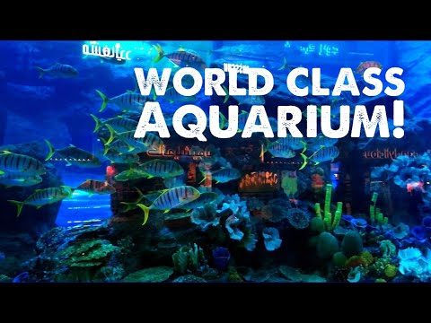 Dubai Aquarium and Underwater Zoo (Dubai Mall) | Eduarvis