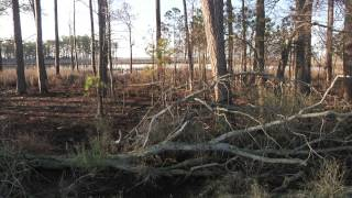 Safe Haven: The Delmarva Fox Squirrel and Blackwater National Wildlife Refuge
