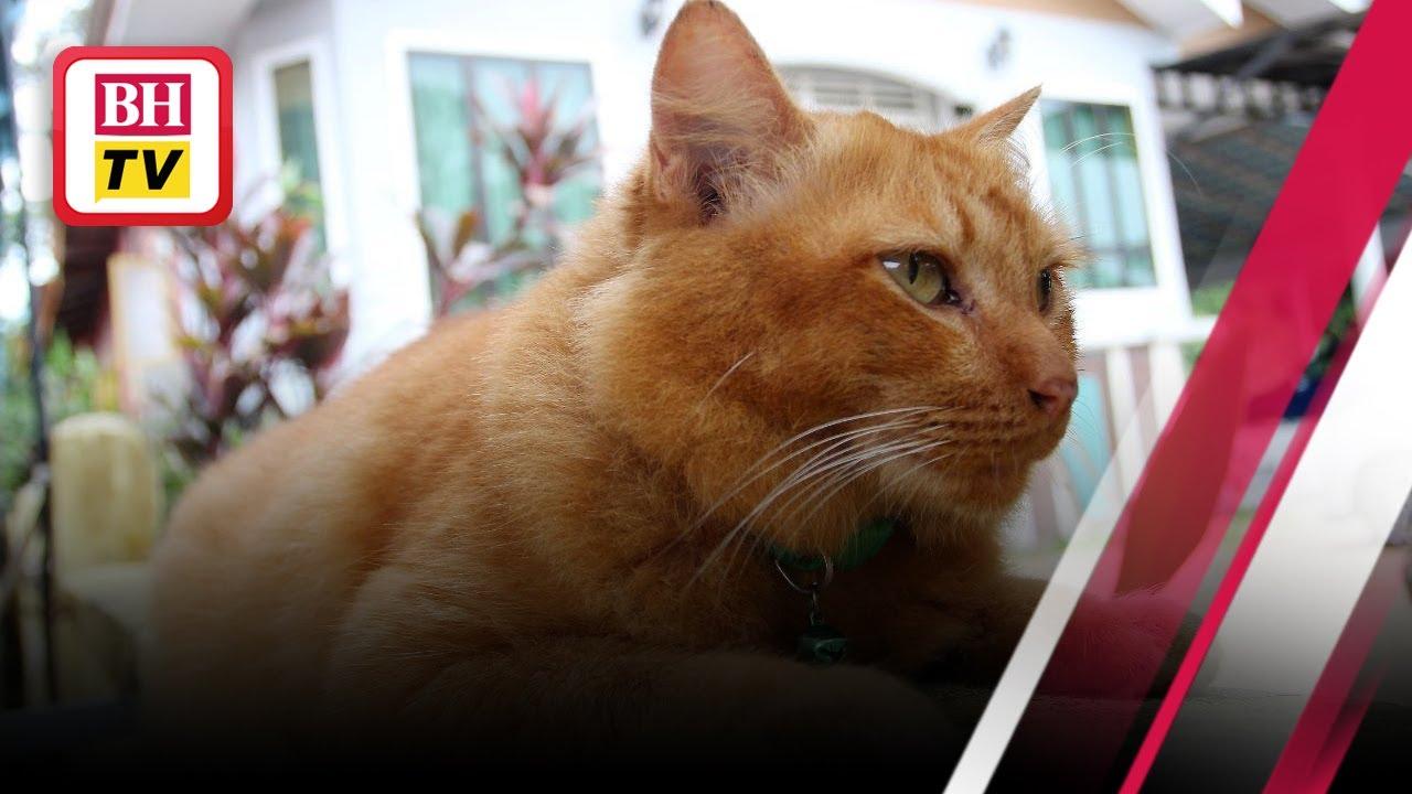 Kisah Nana Kucing Jantan Setia Ziarah Kubur Tuan Wilayah Berita Harian
