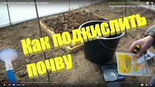 Как подкислить почву для голубики.