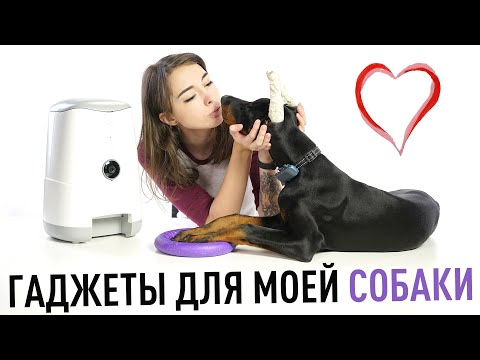 Вопрос: Какие ребра у собак больше всего выделяются при вдохе и по чему?