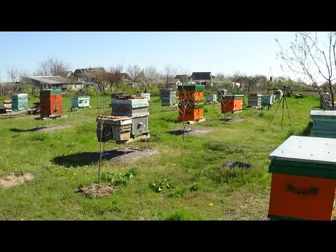 Смотреть Пчеловодство как бизнес - теория и практике на пасике онлайн