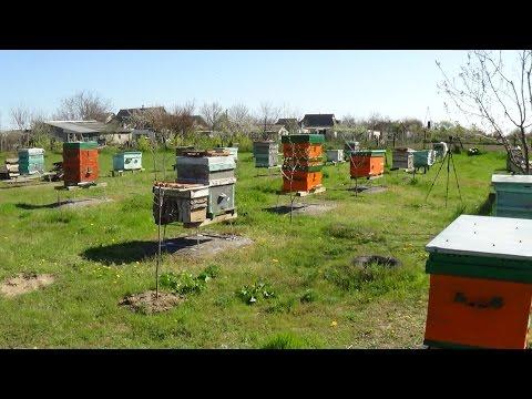Пчеловодство как бизнес видео
