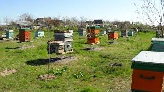 пчеловодство как бизнес - теория и практике на пасике