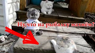 Кот Басик и его друзья. Игаем с Басиками.