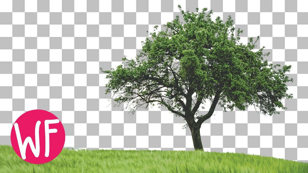 photoshop tutorial how to cut out a tree in photoshop youtube