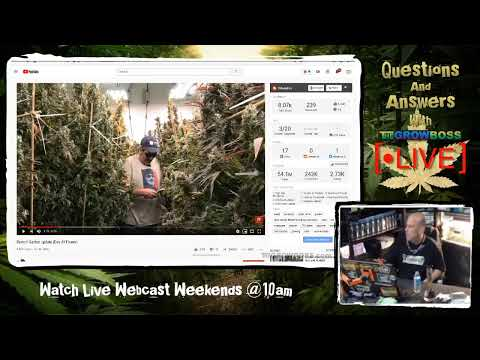 Cannabis Hotline - Live Marijuana Call In Show - Learn How To Grow Weed With The Grow Boss