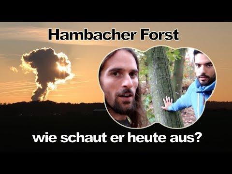 Hambacher Forst - was geschah hier wirklich? Sind erneuerbare Energien die Zukunft?