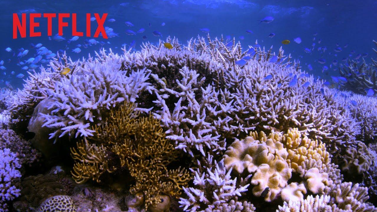 Em Busca Dos Corais Trailer Oficial Hd Netflix Youtube