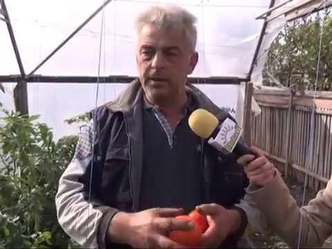 Calcule cu plus în legumicultură  Un agricultor din Călăraşi îi învaţă pe românii să facă profit pe