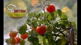 видео Огород на подоконнике - Огурцы за 50 дней на северном балконе