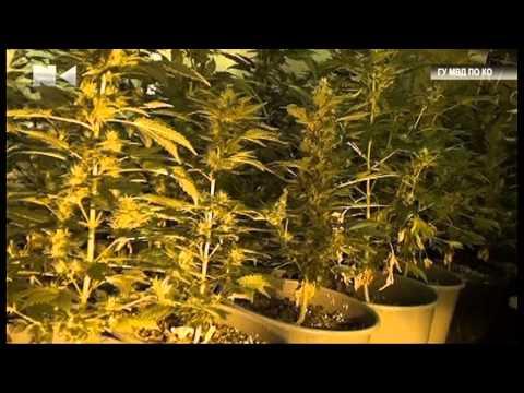 Как выращивать марихуану в подвале как прорастить семена марихуаны