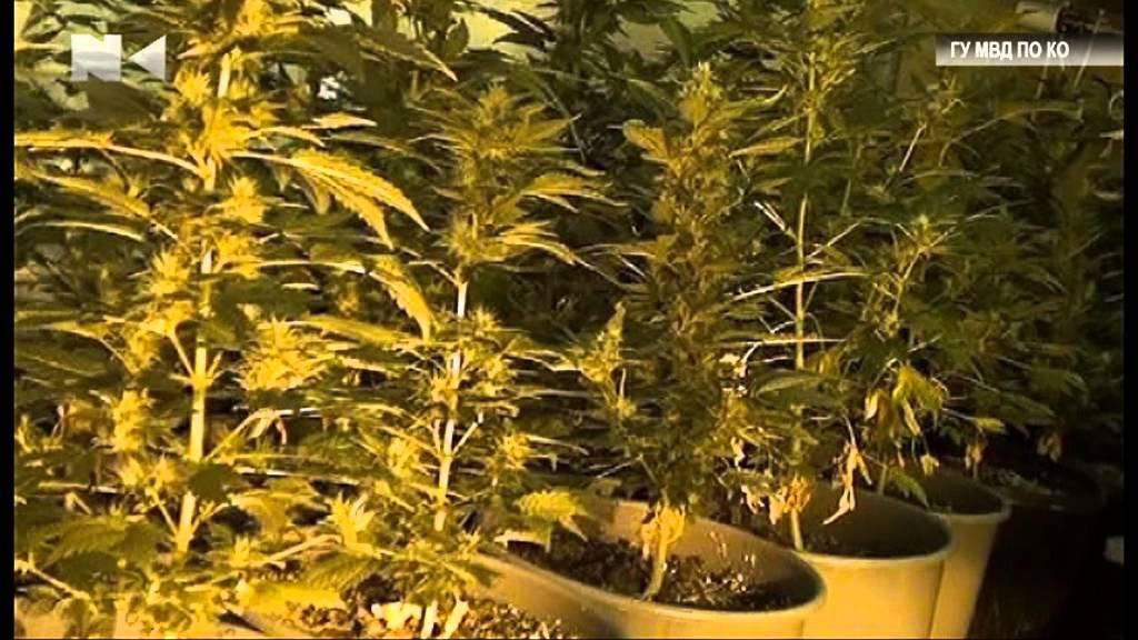 телки курят марихуану