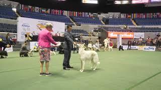 2021 dog show world   Latest dog show 2021