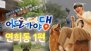 서울에서 대형견과 어딜가야댕? 망치와응팔 편ㅣ어딜가야댕…