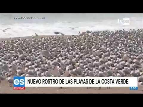 Coronavirus En El Perú: Este Es El Nuevo Rostro De Las Playas De La Costa Verde