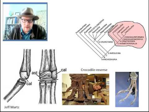 GEO 6350 Vertebrate Paleontology Lecture 15: Archosauromorphs