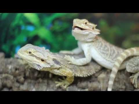 pets-and-pastimes-the-reptile-&-exotic-pet-centre-|-stoke-on-trent