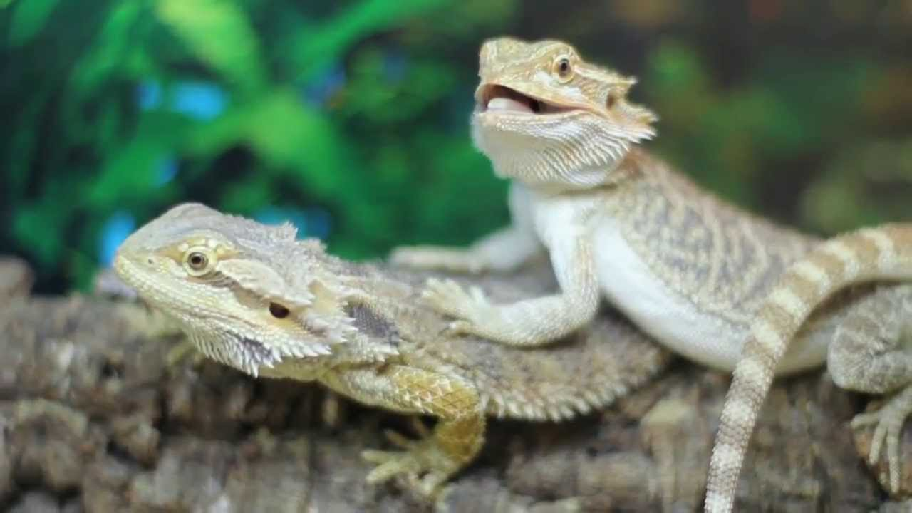 Pets and Pastimes The Reptile & Exotic Pet Centre   Stoke ...
