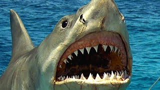 Jaws Was Actually Inspired By This Living Nightmare