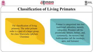 Classification and Distribution of Living Primates