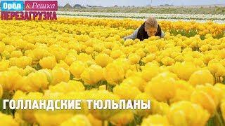 Самый большой букет тюльпанов! Орёл и Решка. Перезагрузка