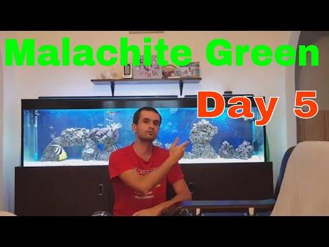 Malachite Green Treatment Reef Aquarium Day 5 Update