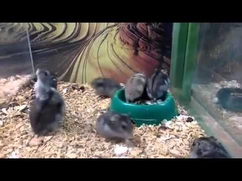 Ruh hastası hamster :)