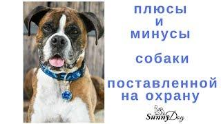 Плюсы и минусы собаки поставленной на охрану