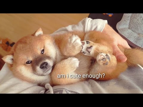 Am I cute enough? I can't stop watching this on repeat!