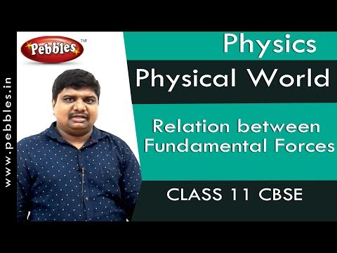 Relation between Fundamental Forces : Physical World | Physics | Class 11 | CBSE