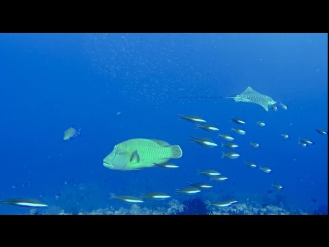 OUTSTANDING SCUBA DIVING: Dhonfanu Thila | MALDIVES | Baa Atoll | amazing dive sites of the world