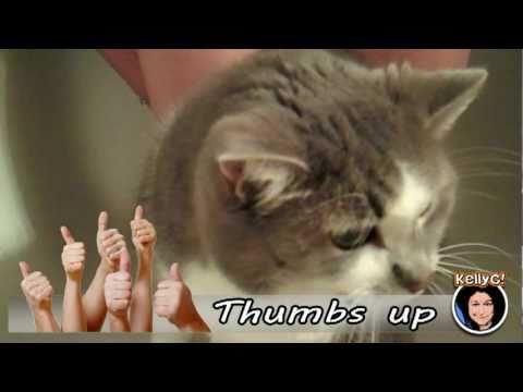 Wash a Cat Bum Pee Your Pants