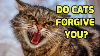 How Long Do Cats Stay Angry?