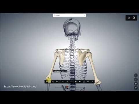 Schultergürtel - YouTube