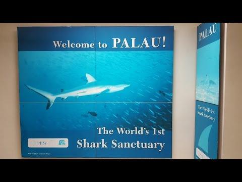 Die ersten Tage in Palau