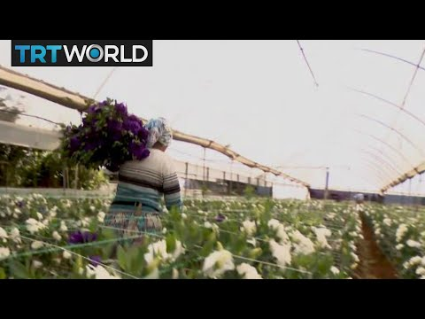 Flower Power: Turkey aims for $500M flower exports