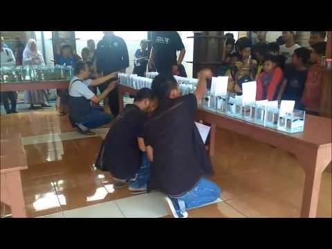 Kontes Ikan Cupang Seru Di Kota Jepara