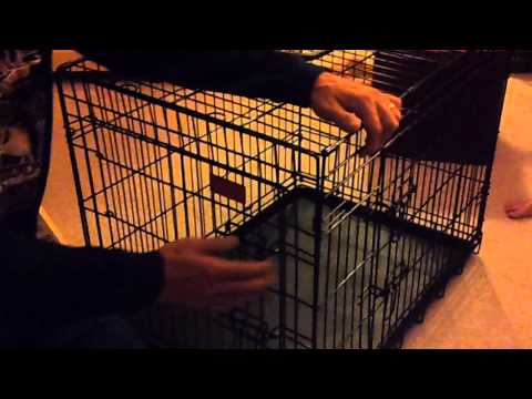 breaking-down-the-dog-crate-101-(for-grandpa)
