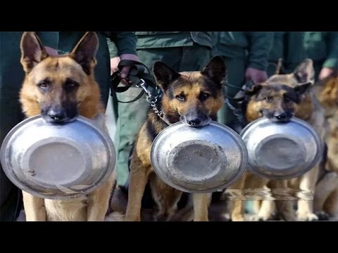 Best Of Trained & Disciplined Dogs Compilation